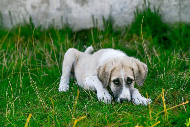 Détecter rapidement les allergies de votre chien
