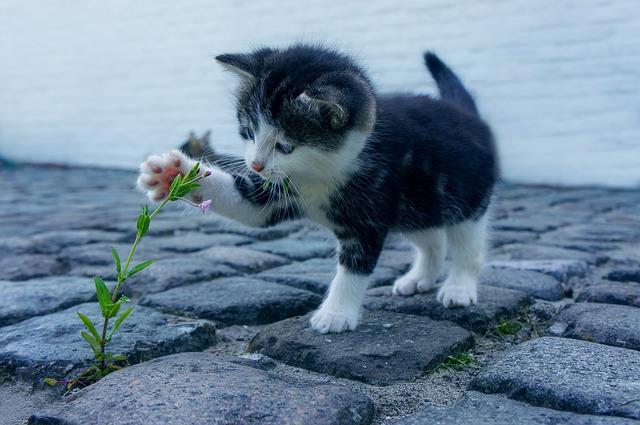 chaton jouant avec fleur