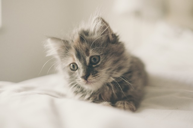 un jeune chat sur le lit